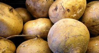 Jicama raw group