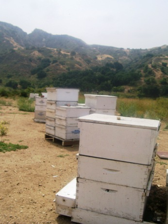 The_apiary_2