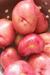 Red_potato_close_up_2